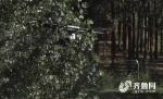 """潍坊19架无人机""""围剿""""蝗虫,村民:一定要把它灭了 - 东营网"""