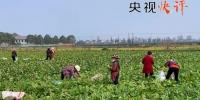【央视快评】建立与疫情防控相适应的经济社会运行秩序 - 中国山东网